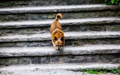 Welpen und Treppen